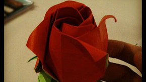 Thumb_rose_of_janessa_2